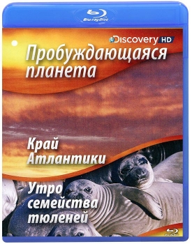 Пробуждающаяся планета: Край Атлантики / Утро семейства тюленей