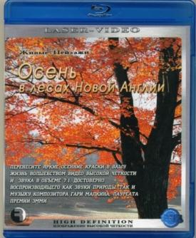 Живые пейзажи: Осень в лесах Новой Англии